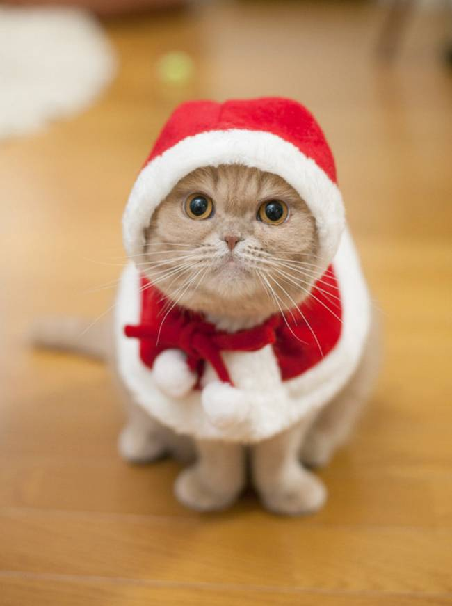 gatos-natal-3