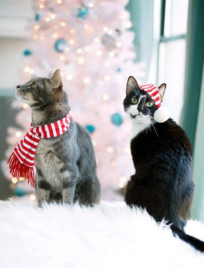 gatos-natal-4