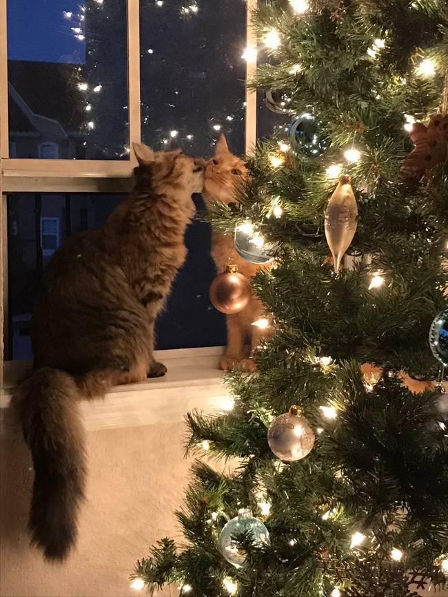 gatos-natal-5