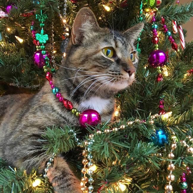 gatos-natal-7