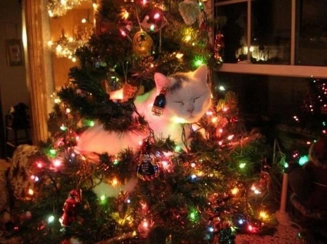 gatos-natal-8