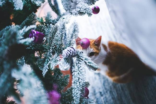 gatos-natal-9