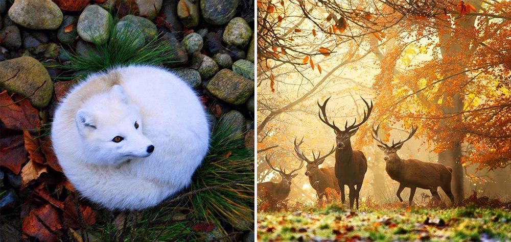 natureza-destaque