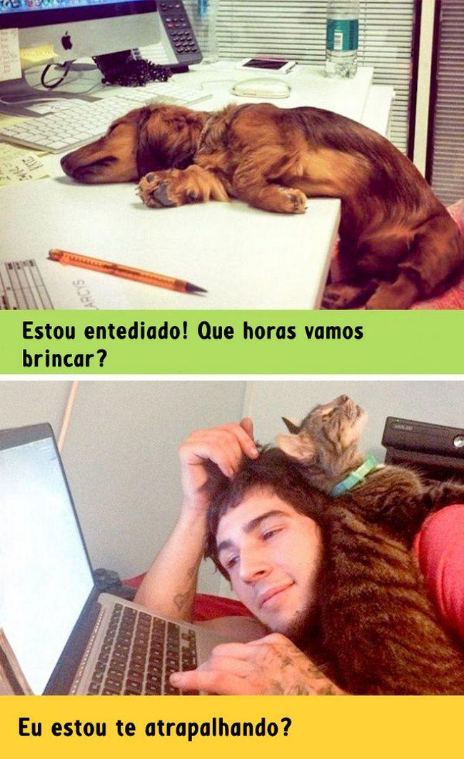 diferenca-gato-cachorro-1