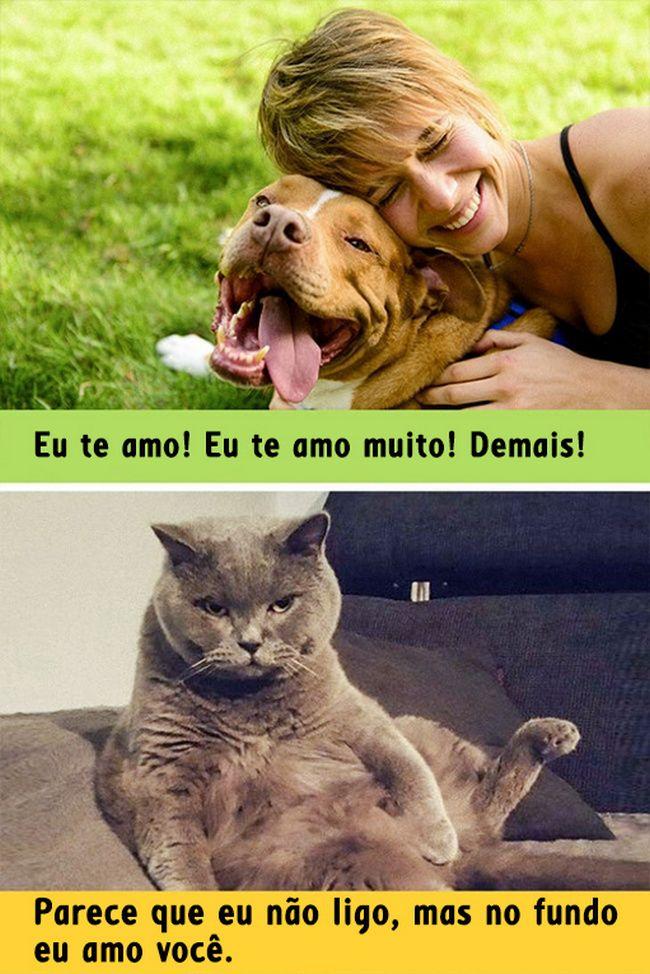 diferenca-gato-cachorro-13