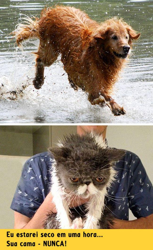 diferenca-gato-cachorro-3