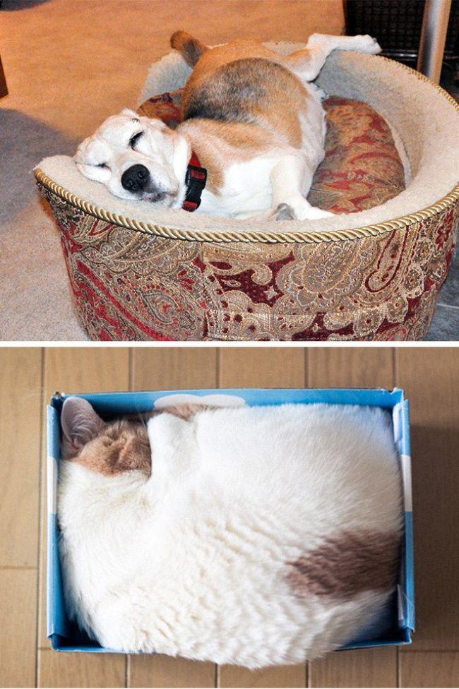 diferenca-gato-cachorro-4