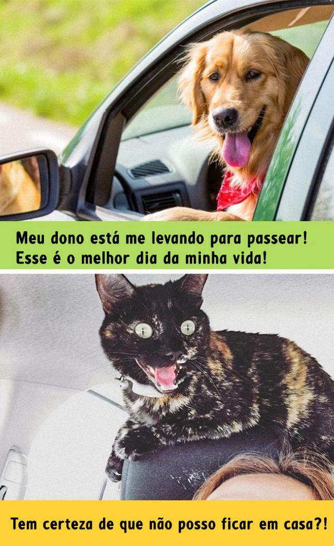 diferenca-gato-cachorro-5