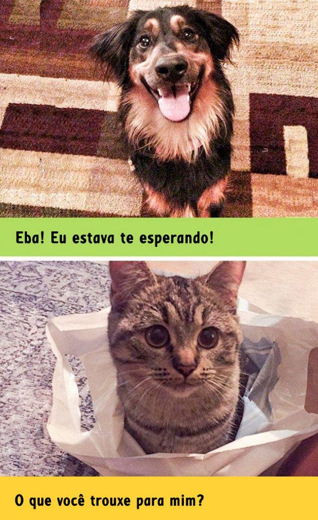 diferenca-gato-cachorro-6