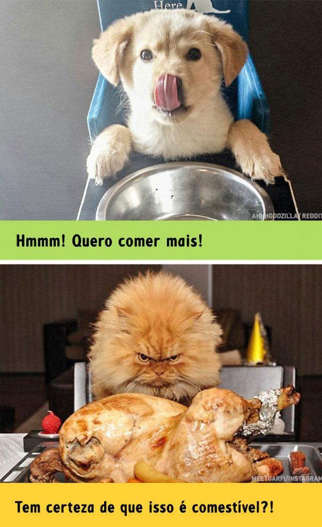 diferenca-gato-cachorro-7