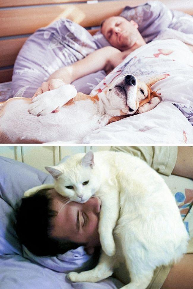 diferenca-gato-cachorro-9