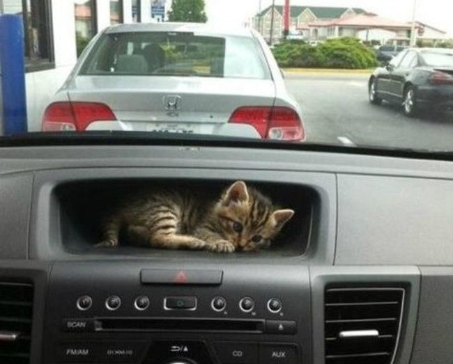 lugares-inesperados-gatos-10