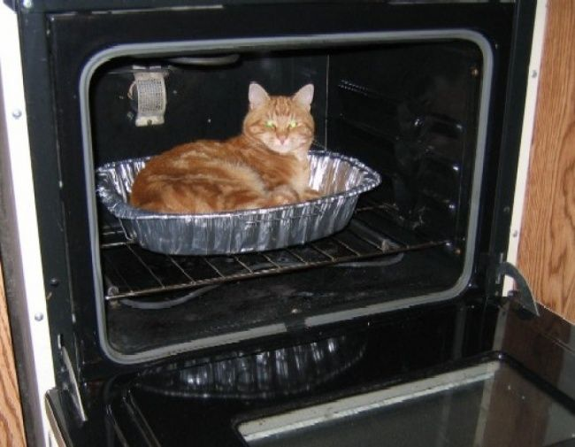 lugares-inesperados-gatos-11