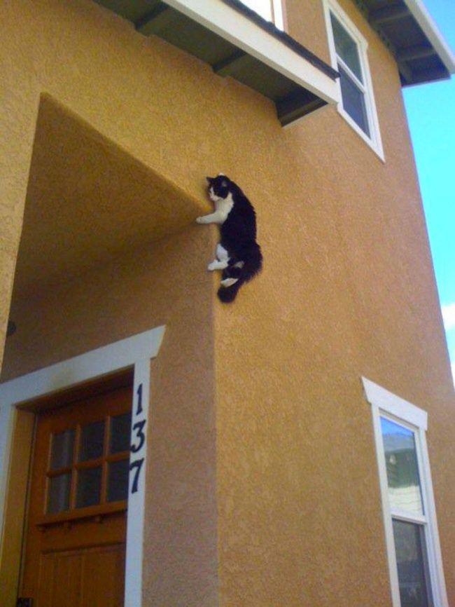 lugares-inesperados-gatos-12
