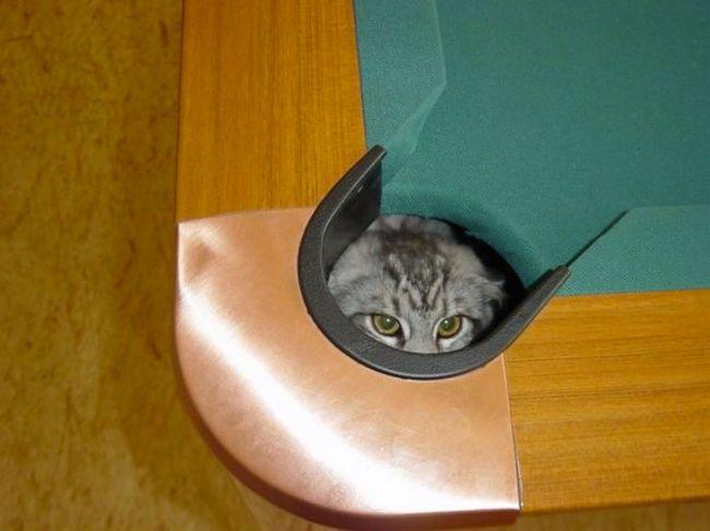 lugares-inesperados-gatos-13