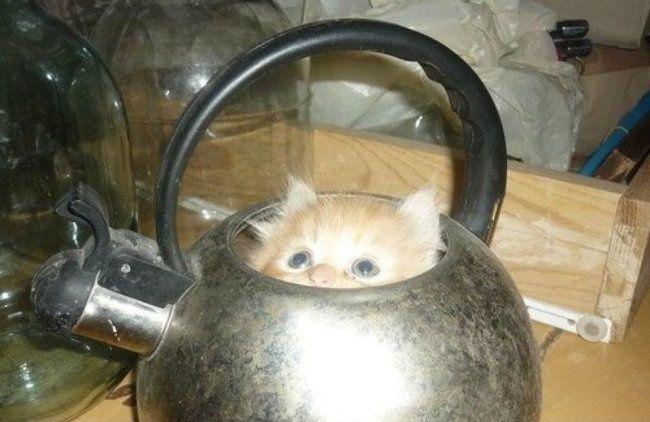 lugares-inesperados-gatos-15