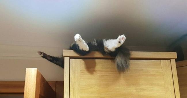 lugares-inesperados-gatos-17