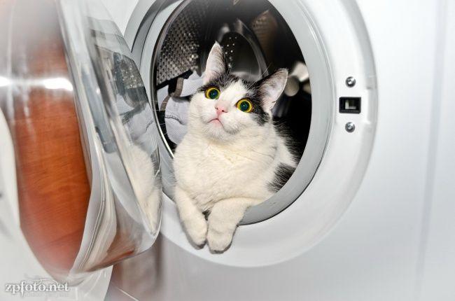 lugares-inesperados-gatos-3