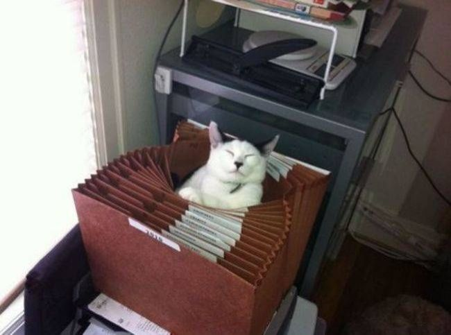 lugares-inesperados-gatos-5