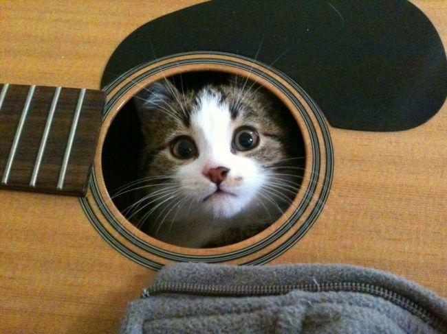 lugares-inesperados-gatos-7