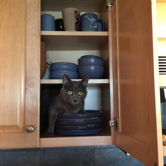 lugares-inesperados-gatos-9