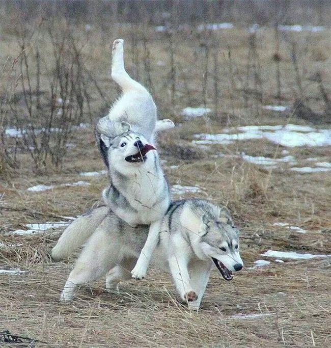 cachorros-que-falharam-1
