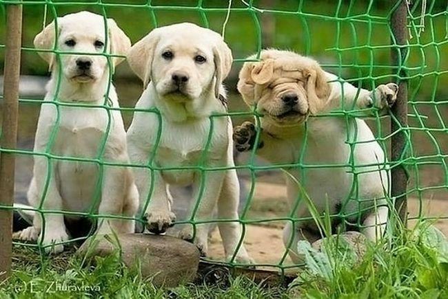 cachorros-que-falharam-4