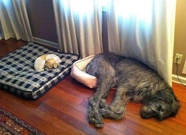 cachorros-que-falharam-5