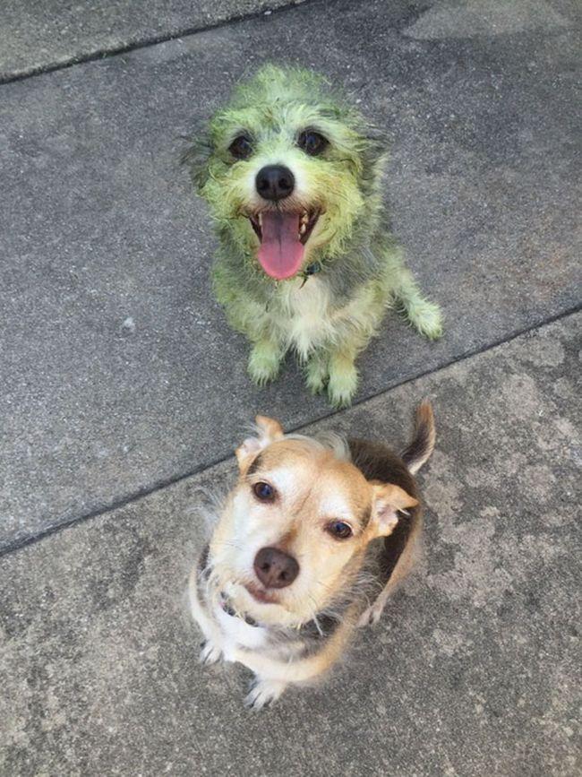 cachorros-que-falharam-7