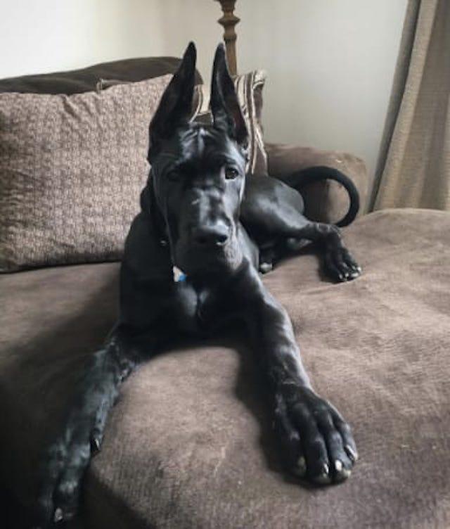Cachorro grande