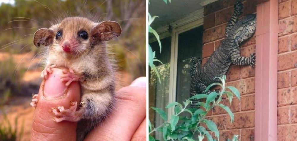 Resultado de imagem para 24 Fotos mostrando que a Austrália parece ser de outro mundo