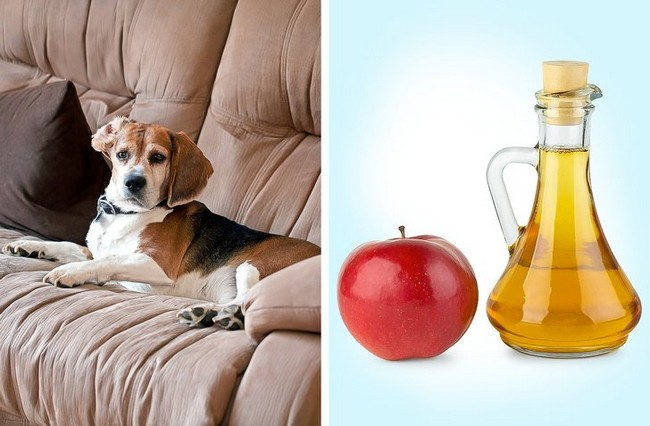 11 Tricks to Eliminate Bad Odor Produced by Pets